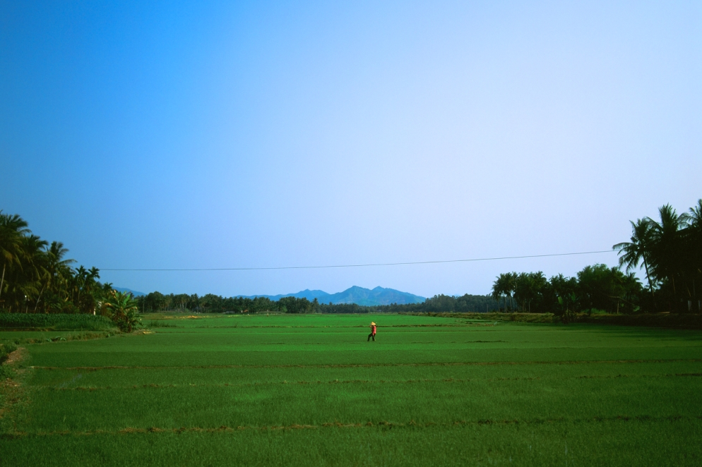 rice_farmer_1000